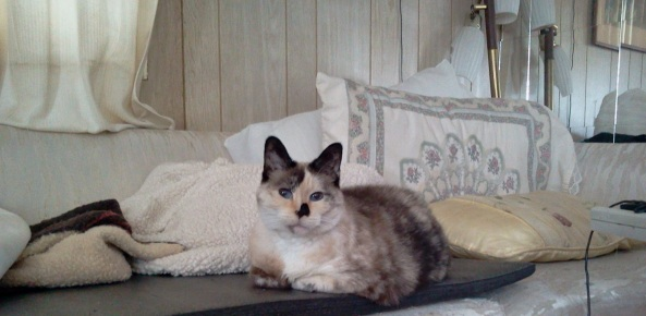 Thanksgiving Peekaboo Cat cropped